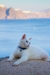 Lazy Cat, Oia,Santorini