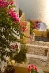 Bougainvilla, Firostefani, Santorini