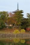 Five Story Pagoda of Kofukuji Temple and Lake, NaraPark