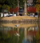 Heron and reflection,Nara