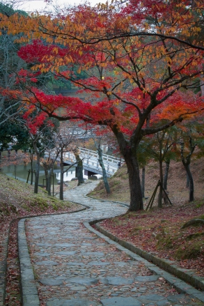 Steps leading through Kataoka Plum Grove to Sagiike Pond, Nara P
