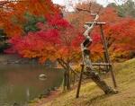 Dead tree and autumn colours, Sagiike Pond, NaraPark