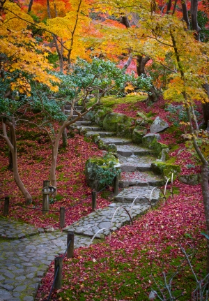 Stone Steps, Autumn Colours and Leaf Fall, Yoshikien Garden, Nar