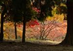 Autumn Colours in NaraPark