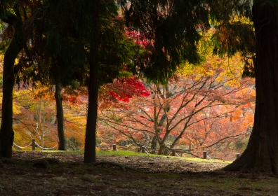 Autumn Colours in Nara Park