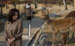 Deer Disgust, NaraPark