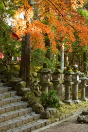 Stone Lanterns near Kasuga Taisha Shrine, Nara Park