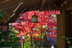 Shrine and autumn colours, Ueno Park