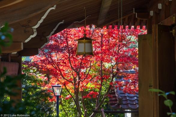 Ueno Park Autumn Autumn Colours Ueno Park