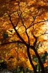 Autumn Colours, UenoPark