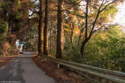Forest near Kurokawa