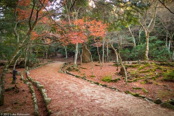 Parkland and Autumn Colours on Mount Misen, Miyajima