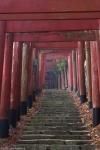 Shinto Torii Gates and Steps, near Oku-no-in Cemetery,Koya-san