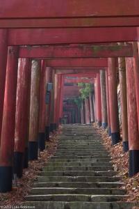 Shinto Torii Gates and Steps, near Oku-no-in Cemetery, Koya-san