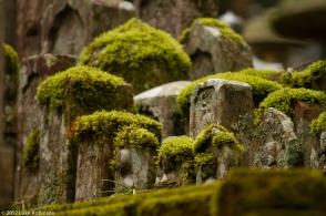 Ancient mossy gravestones, Oku-no-in Cemetery, Koya-san