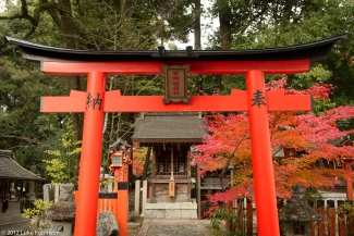 Torii gate at Imamiya Shrine, Kyoto
