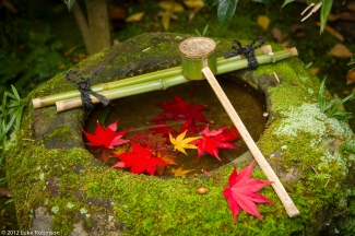 Maple leaves and wash basin, Koto-in Temple, Kyoto