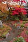 Autumn colours and stream, garden of the Tenryuji Temple,Kyoto