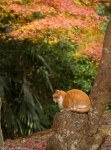 Cat on the Philosopher Path,Kyoto