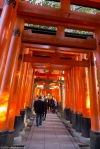 Torii gates, Fushimi Inari Shrine,Kyoto